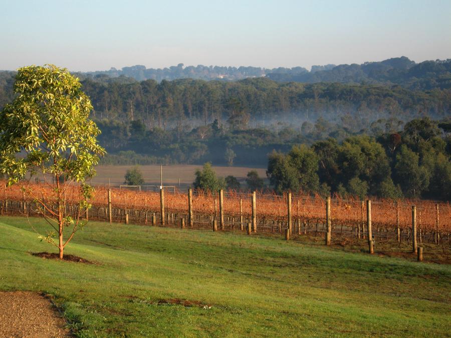 Wine; vineyard