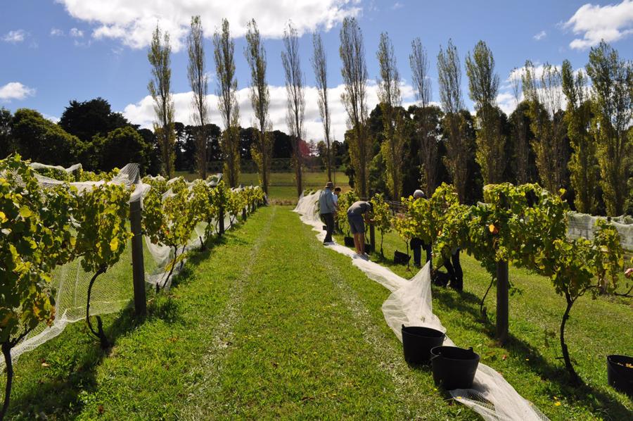 staindl wines