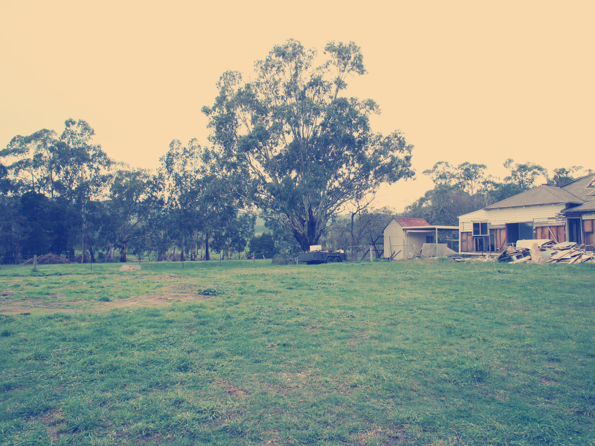 Murrindindi; Nashville; Photography; Landscape; Rural; Country; Countryside; Manna gum; Eucalyptus