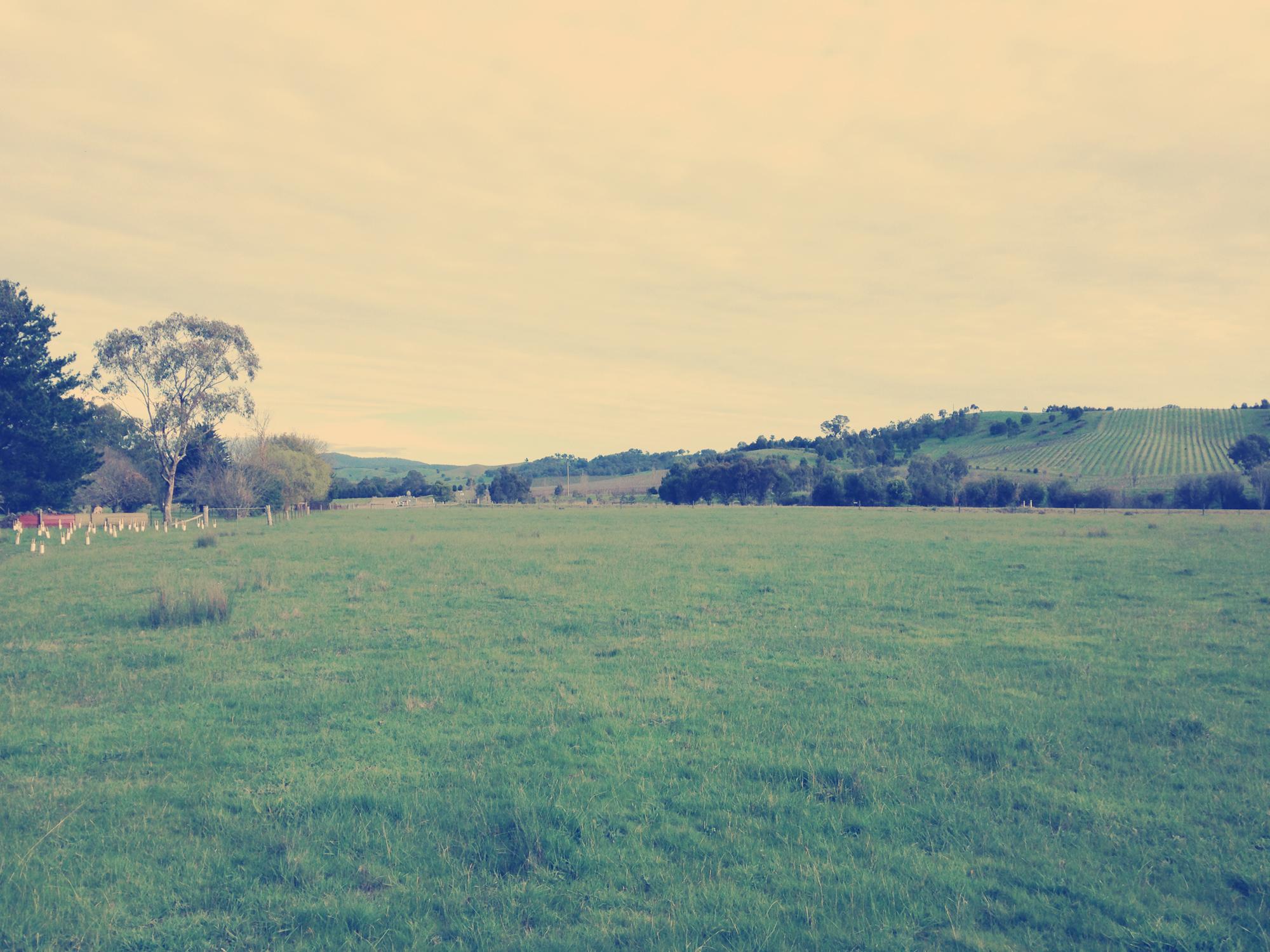 Nashville; Photography; Landscape; Rural