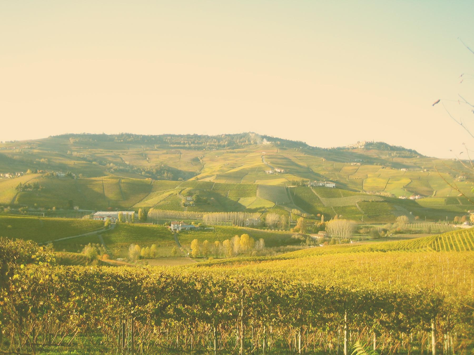 Italy; Piemonte; vineyard; winery; wine; travel